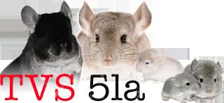 TVS 5la